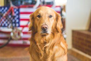 pet friendly apartment